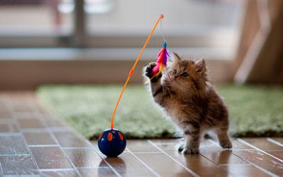 как приучить котенка к новому дому